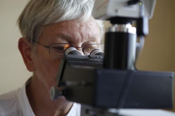 Frau Schimanowski- Thomsen bei ihrer Arbeit am Mikroskop